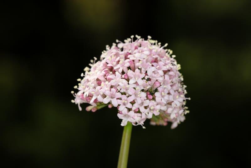 T?te de fleur photos stock
