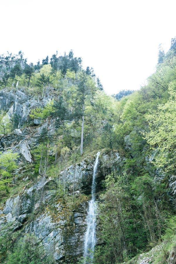 T?TT UPP: F?rnyande str?mvatten som fl?dar ner mossa, t?ckte bruna stenar i en h?rlig gr?n skog i Montenegro Filmiskt skott arkivfoton