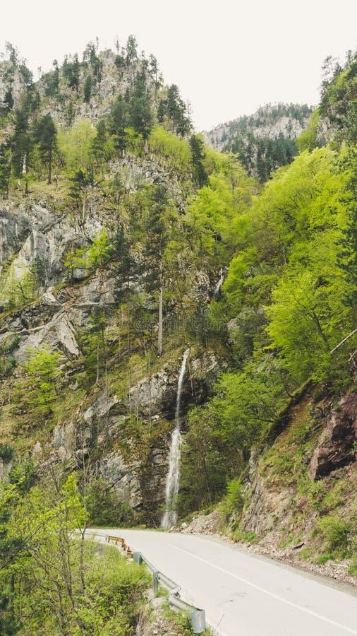 T?TT UPP: F?rnyande str?mvatten som fl?dar ner mossa, t?ckte bruna stenar i en h?rlig gr?n skog i Montenegro Filmiskt skott fotografering för bildbyråer
