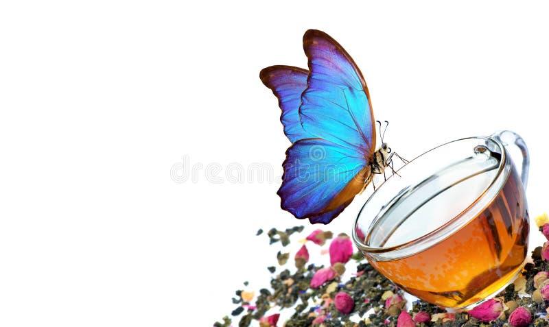 T? verde tazza di t? verde con i fiori ed i pezzi della frutta su un bianco t? di miscela farfalla blu di morpho che si siede su  fotografia stock libera da diritti