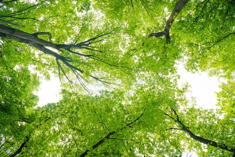 For?t verte avec des arbres images libres de droits