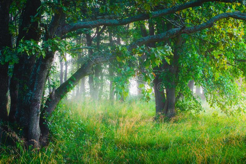 For?t verte photographie stock libre de droits