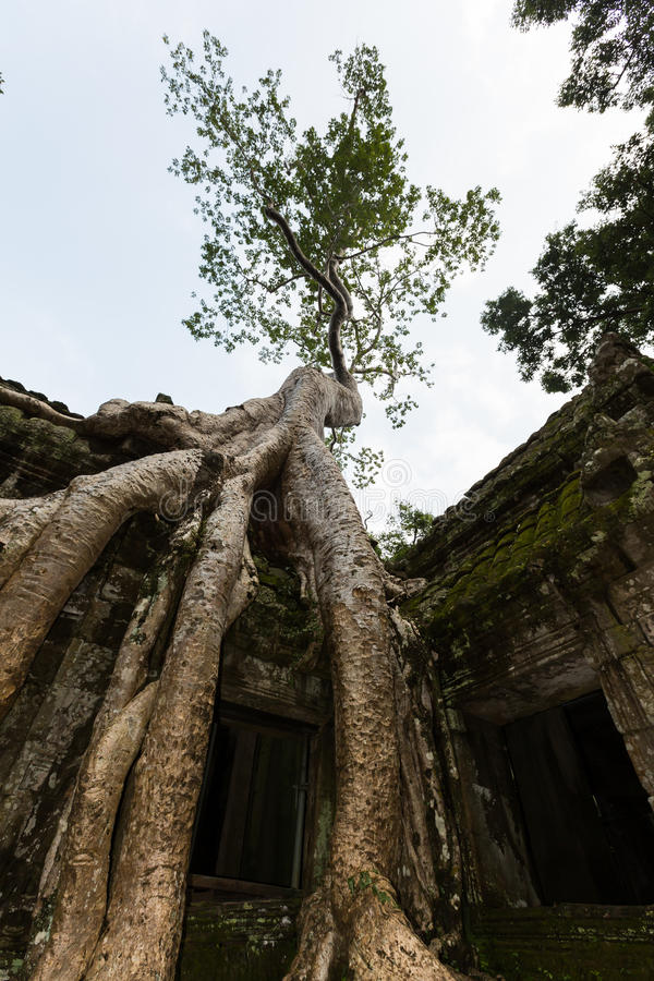 Free Ta Phrom, Angkor Wat, Cambodia Stock Image - 44044911