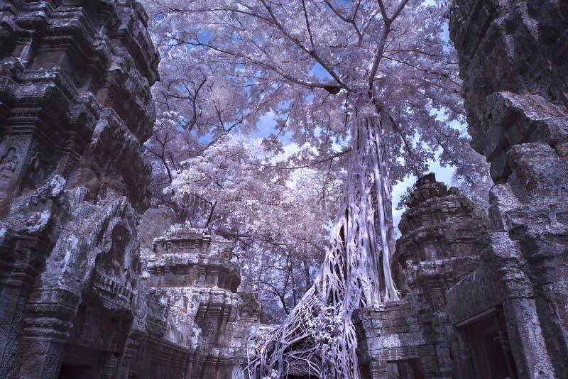 Ta prohm城堡暹粒市柬埔寨 免版税图库摄影