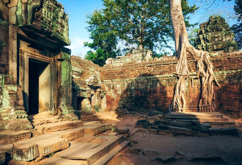 Ta Prohm寺庙,吴哥,柬埔寨的古典图片 免版税图库摄影