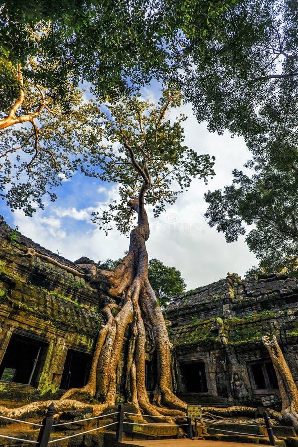 Ta Prohm寺庙, Angkor,柬埔寨 免版税图库摄影