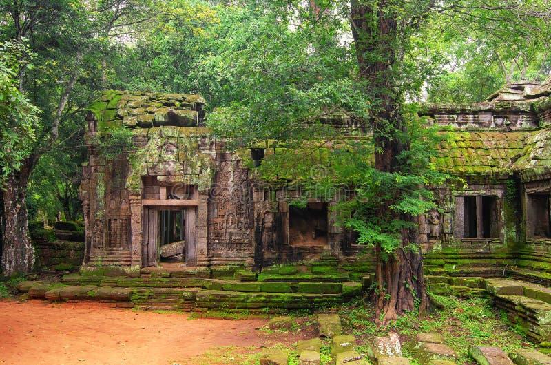 Ta Prohm,一部分的古老高棉寺庙复合体在密林 库存图片