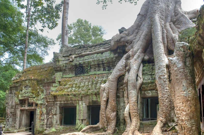 Ta Prohm royalty free stock image