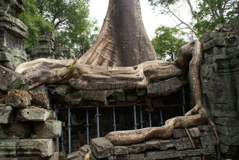 Ta Prohm Angkor stock fotografie