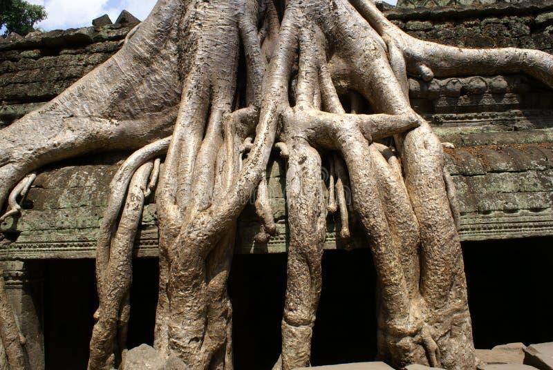 TA Prohm Angkor imagen de archivo libre de regalías