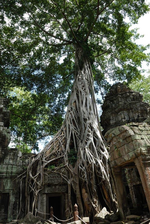 ta prohm angkor Cambodia wat fotografia stock