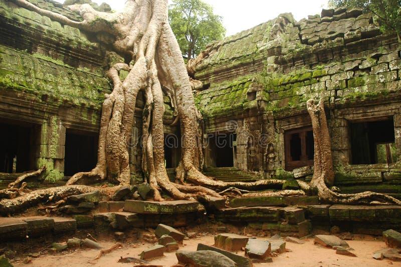 TA Prohm, Angkor Wat imagenes de archivo