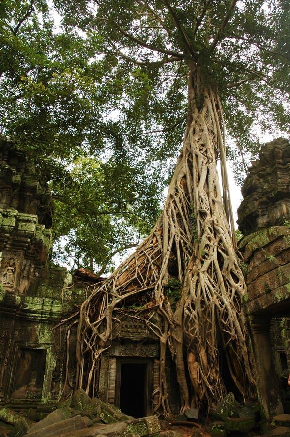 Ta Prohm, Angkor Wat images stock
