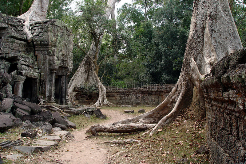 Ta Prohm - arbre d'extrémité de templs photos libres de droits