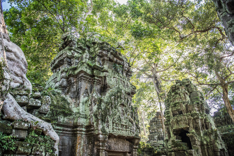Ta Prohm au Cambodge photo libre de droits