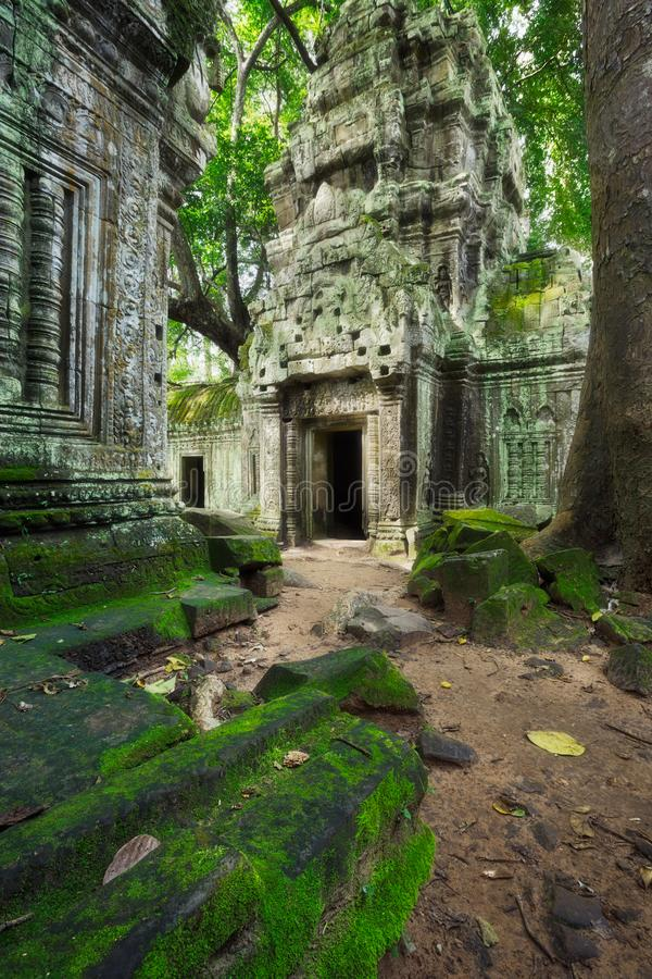 Ta Prohm, Azië De stad in van Siem oogst, Kambodja Oude Khmer architectuur in wildernis stock afbeelding