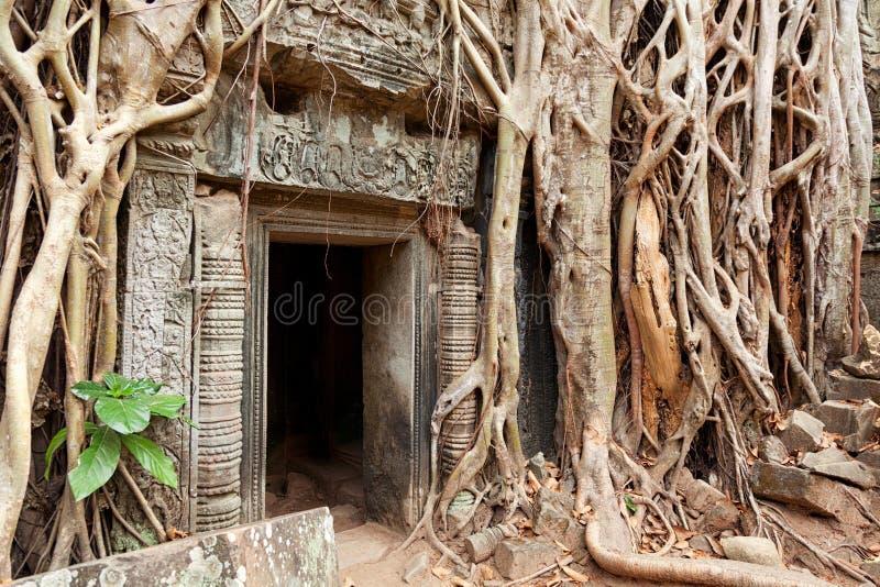 Ta-prohm fördärvar, Angkor Wat, Cambodja royaltyfria bilder