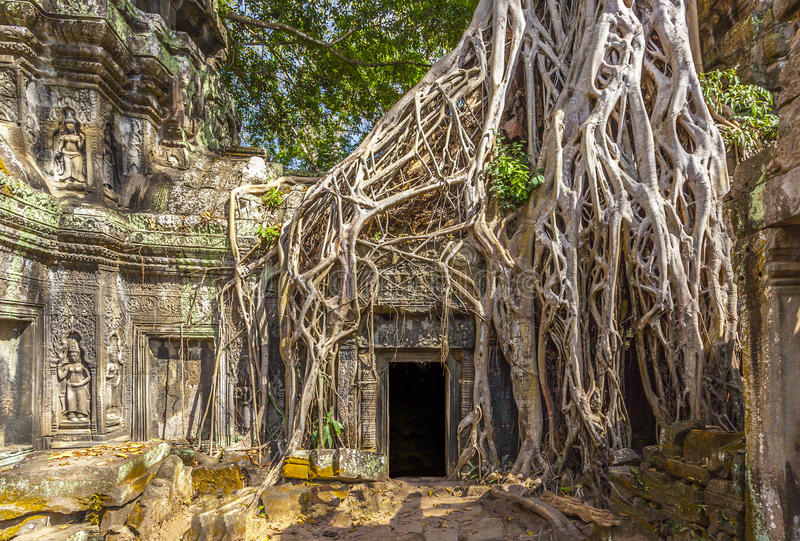 Ta Prohm in Kambodscha stockfotos