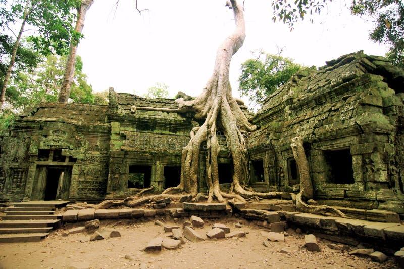Ta Prohm, Siem Reap lizenzfreies stockbild