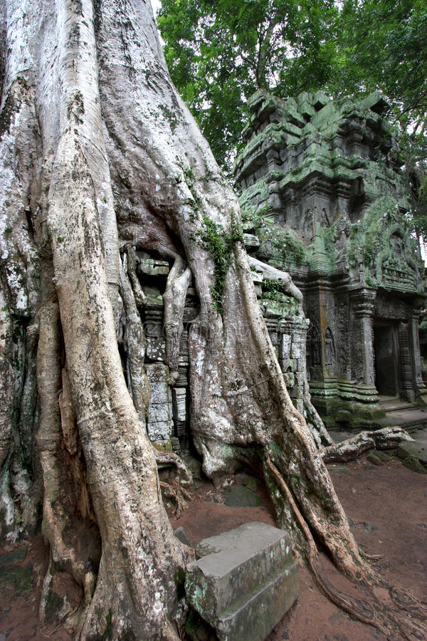 Download Ta Prohm Temple stock image. Image of reap, ancient, tree - 11260411