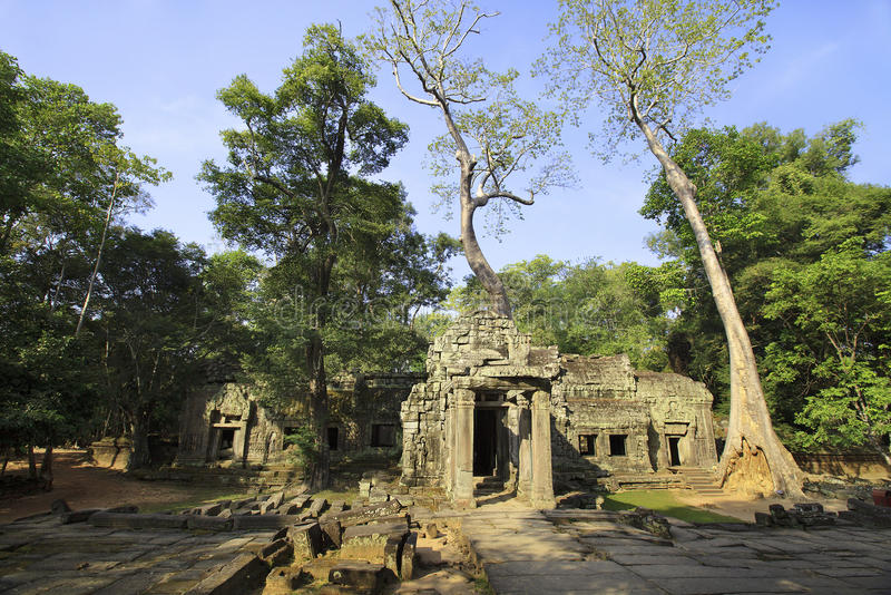 Download Ta Prohm temple stock photo. Image of cambodian, general - 17604024