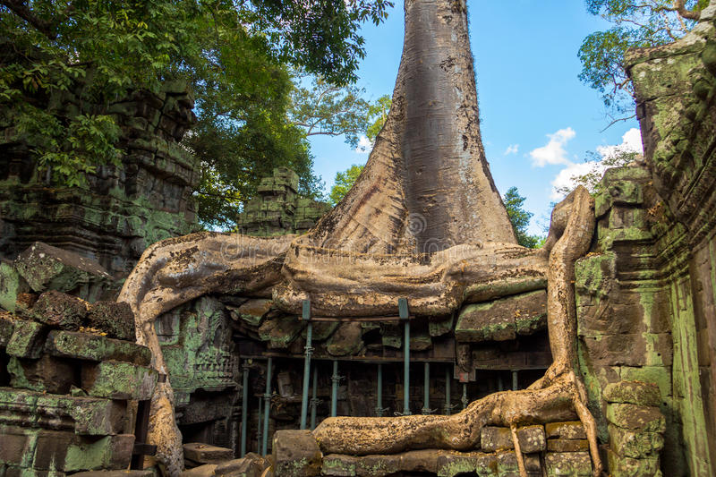 Ta Prohm temple, ancient architecture in Cambodia. Ta Prohm temple is ancient architecture in Cambodia stock photography