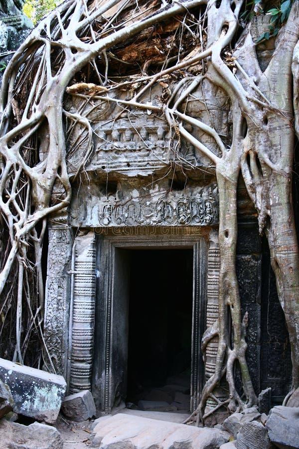 Ta Prohm temple,Angkor royalty free stock photography