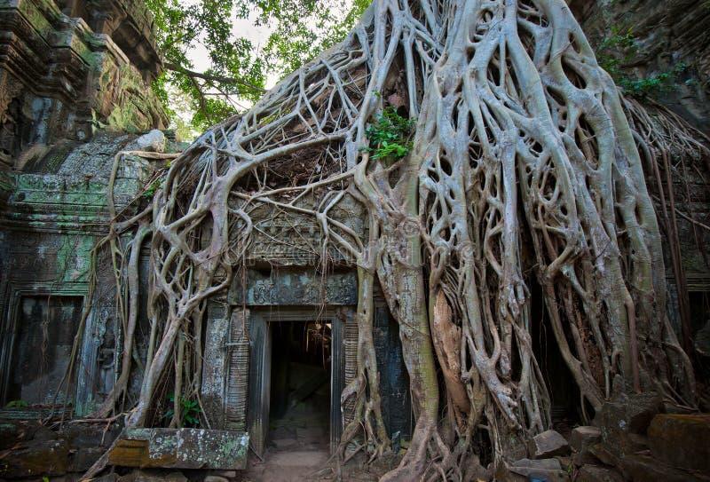 Ta Prohm Temple, Angkor, Cambodia royalty free stock image