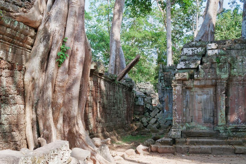 Download Ta Prohm Temple. Angkor. Cambodia Stock Image - Image: 33774529