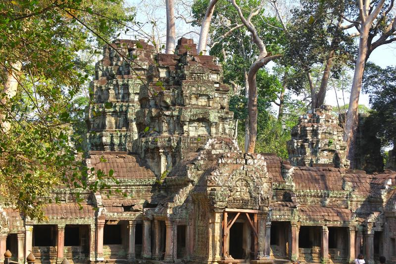 Ta Prohm temple at Angkor, Siem Reap Province, Cambodia stock photos
