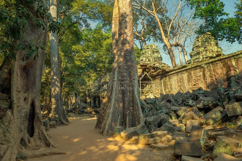 Ta Prohm temple in Angkor Wat Cambodia royalty free stock images