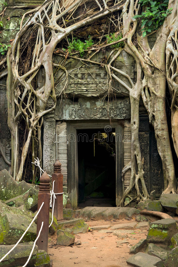 Download Ta Prohm Temple In Cambodia Stock Photo - Image: 18651398