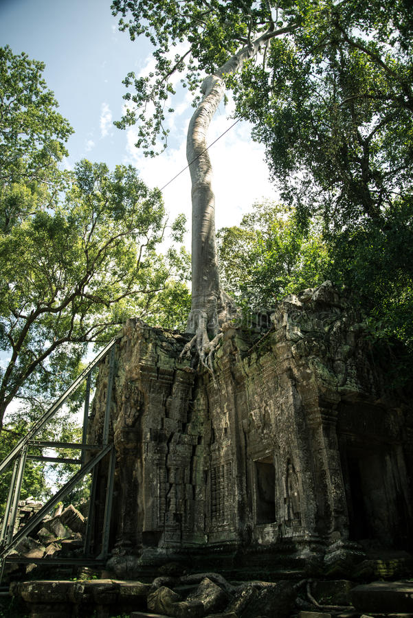 Ta Prohm temple. One of the Angkor temples in Cambodia, close to the city Siem Reap. Not far from the famous Angkor Wat. The temple seems lost in a jungle and royalty free stock photography