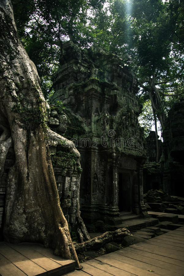 Ta Prohm temple. One of the Angkor temples in Cambodia, close to the city Siem Reap. Not far from the famous Angkor Wat. The temple seems lost in a jungle and royalty free stock image