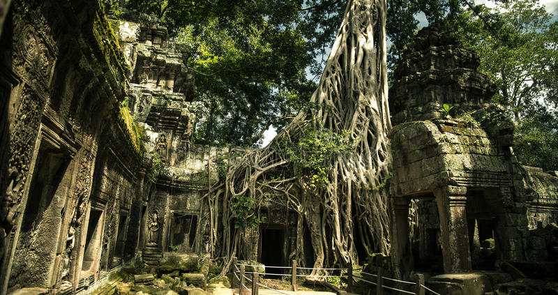 Ta Prohm temple. One of the Angkor temples in Cambodia, close to the city Siem Reap. Not far from the famous Angkor Wat. The temple seems lost in a jungle and stock image