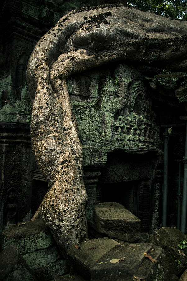 Ta Prohm temple. One of the Angkor temples in Cambodia, close to the city Siem Reap. Not far from the famous Angkor Wat. The temple seems lost in a jungle and stock photo