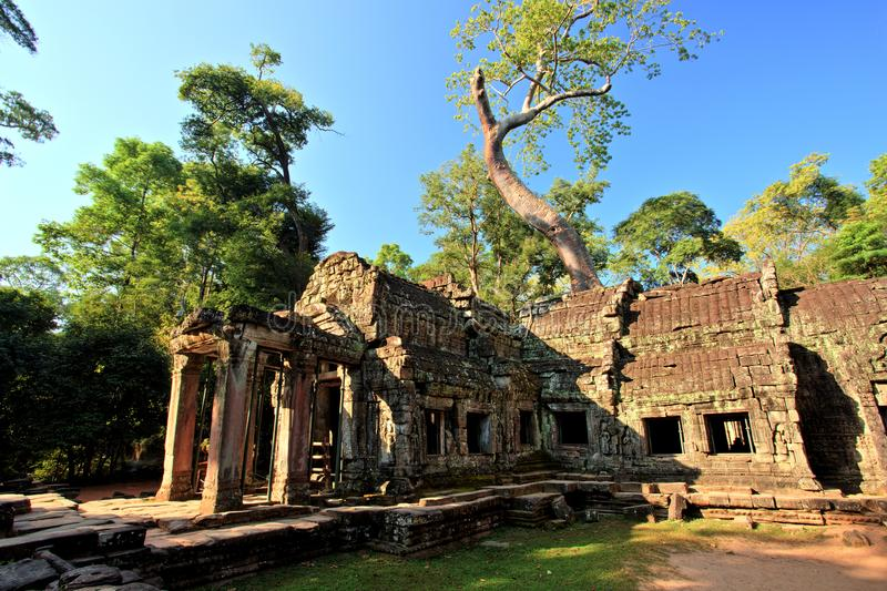 Ta Prohm Temple, Temples of Angkor, Cambodia stock photography