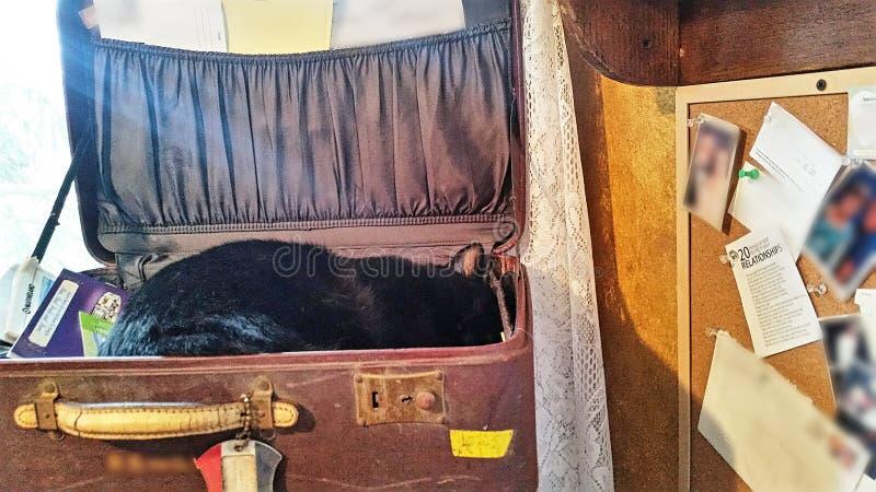 ta sig en tupplur för katt arkivfoto