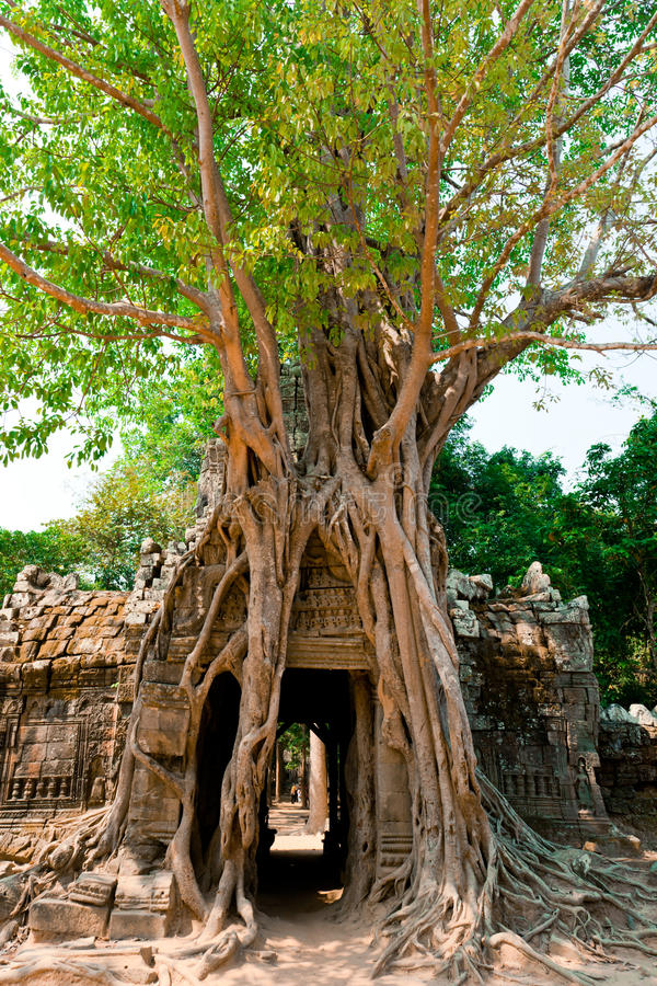 Download Ta Som Temple, Angkor, Cambodia Stock Photo - Image of ancient, carving: 19906918