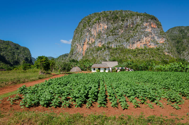Tabacco Valley de Vinales και mogotes στην Κούβα στοκ εικόνες