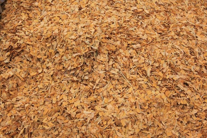 Tabaco imagenes de archivo