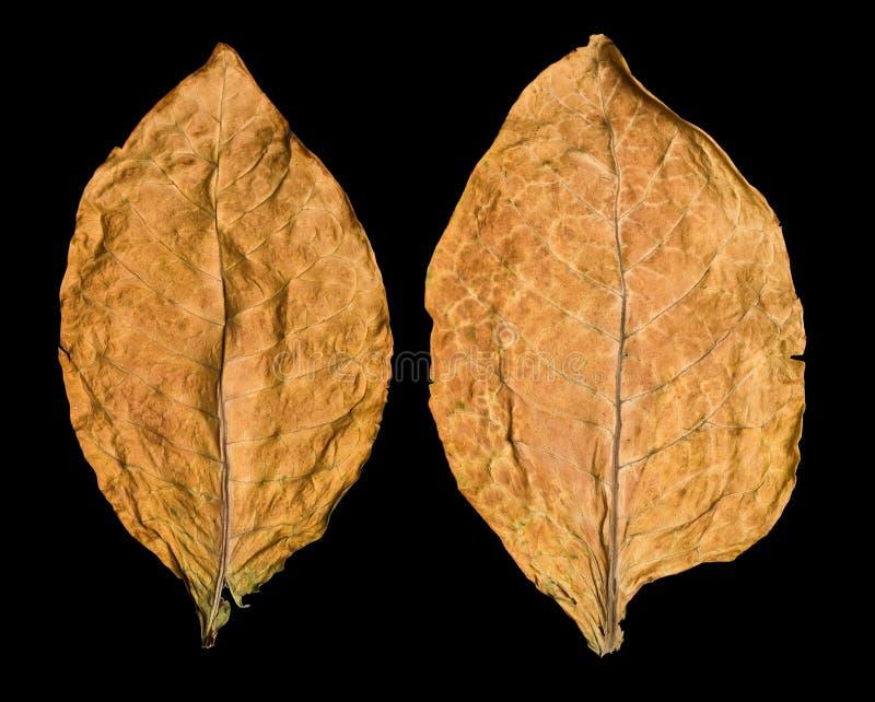 Tabaco de hoja foto de archivo