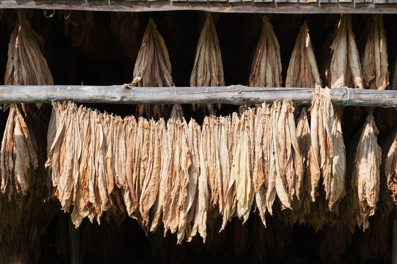 Tabaco secado imágenes de archivo libres de regalías