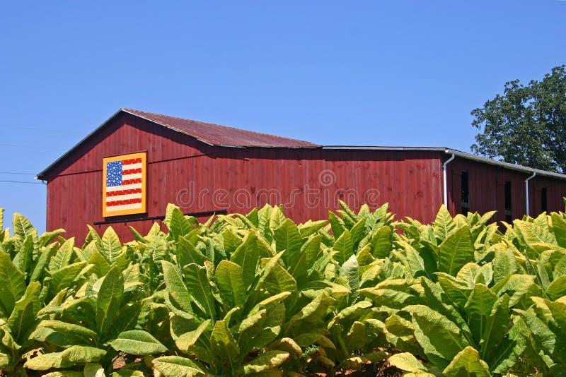 Tabaco y granero foto de archivo libre de regalías