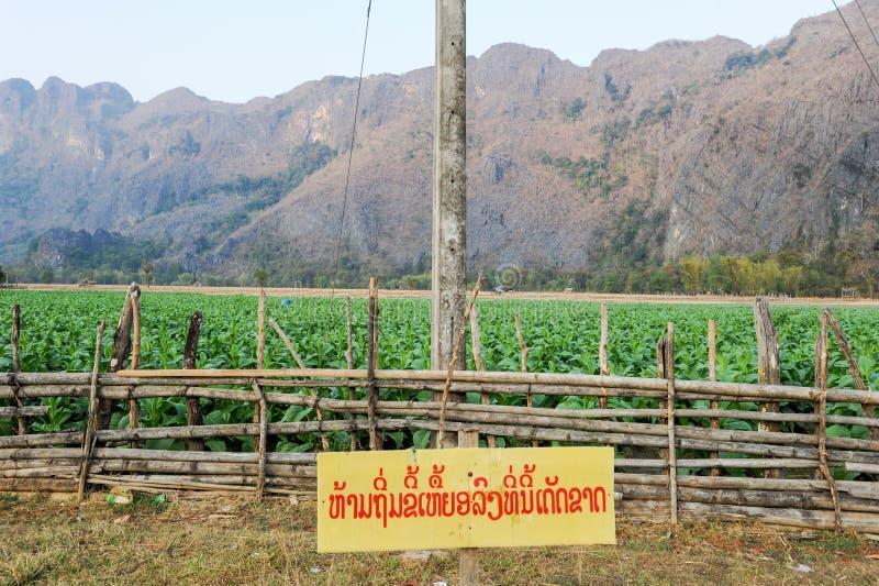 Tabaczne plantacje przy wioską zakaz Kong fotografia stock