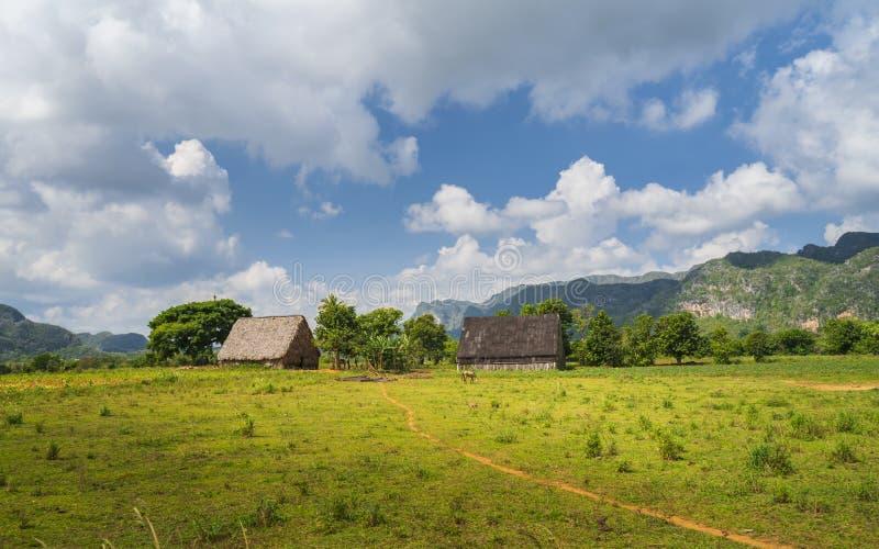 Tabaczny pole w Vinales parku narodowym, UNESCO, pinar del rio prowincja, Kuba obraz royalty free