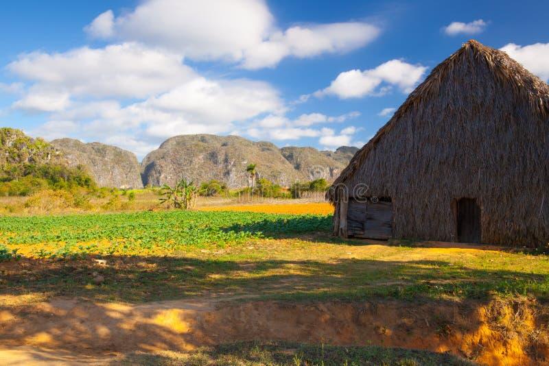 Tabaczny teren w Dolinie De Vinales, pinar del rio, Kuba obrazy stock