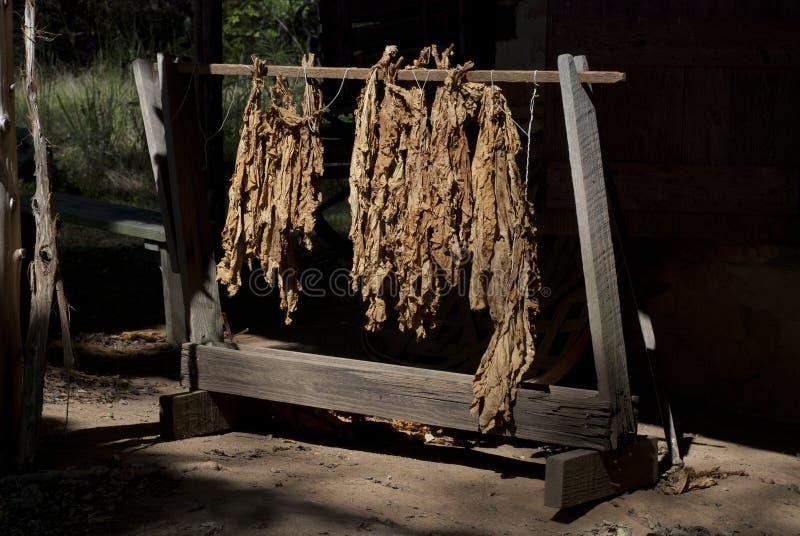 Tabakblätter lizenzfreie stockfotografie