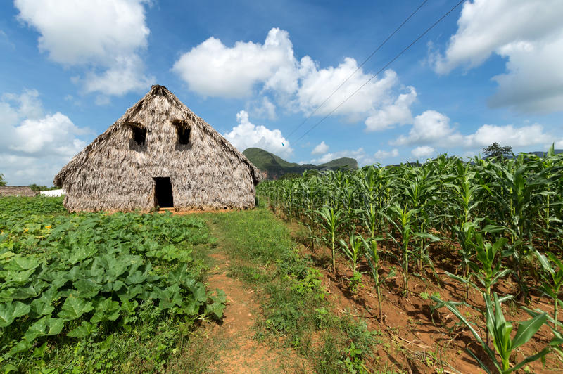 Tabaksschuur in Vinales-vallei, Cuba stock foto