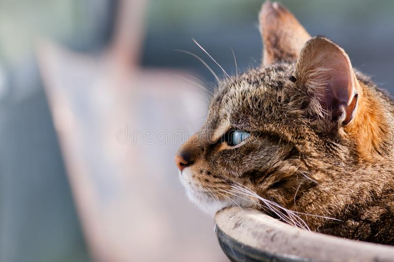 Tabbby cat basking in sunshine laying against flower pot stock images